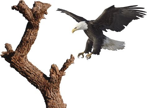 eagle applique bald eagle and tree decal mural tree wall decal murals