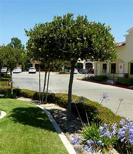 Nice Hawthorn Tree Landscape Designs For Your Home