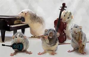 Foto: Quando il gatto non c'è, i topi suonano