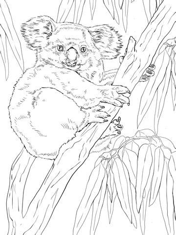 koala  eucalyptus tree coloring page supercoloringcom