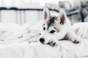 Hundehaare Vom Sofa Entfernen : wie entferne ich hundehaare am besten meine 7 effektiven tipps ~ Bigdaddyawards.com Haus und Dekorationen