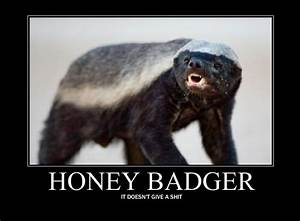 [Image - 119156] | Honey Badger | Know Your Meme