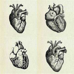 sketch heart tumblr - Buscar con Google   creative ...