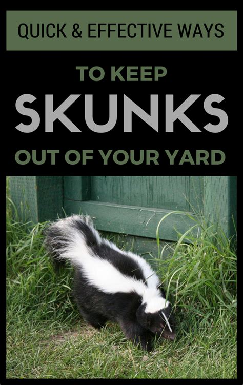 Quick & Effective Ways To Keep Skunks Out Of Your Yard