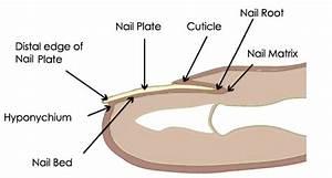 Shenandoah Podiatry  Nail Disorders