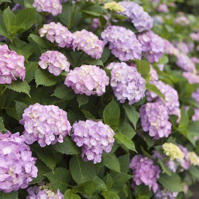 flower basics hunker
