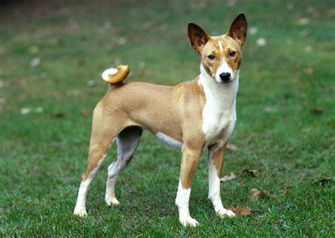 amazing  unusual dog breeds