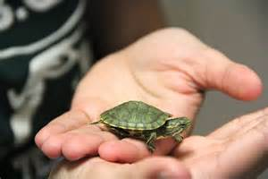 Cute Pet Turtle Shell