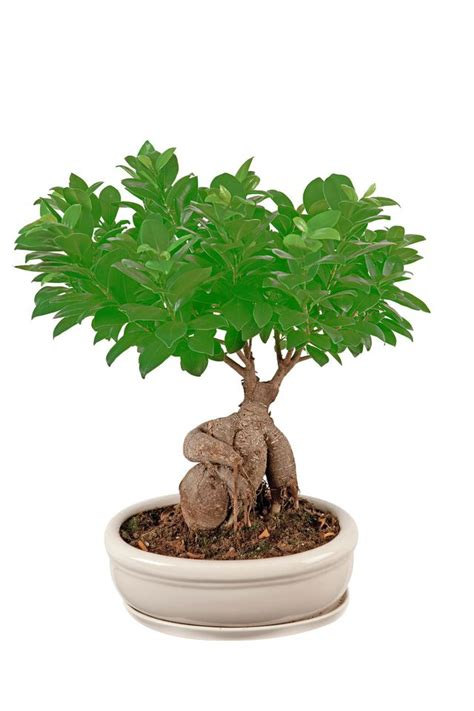 plante cuisine cuisine plante pour cuisine sombre plante pour cuisine sombre or plante pour plante pour