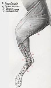 1000  Images About Animal Anatomy On Pinterest