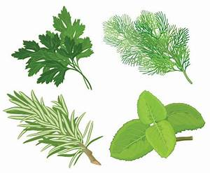Chinese herbal foliage 04 - vector Download Free Vector ...