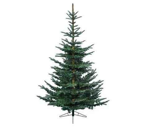 everlands nobilis fir christmas tree trees firs and