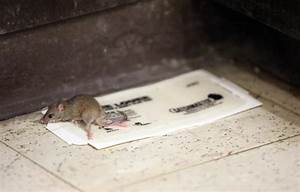 mice mayhem in campus center albany student press blog With mice in between floors