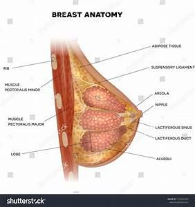 Pin On Female Body Anatomy