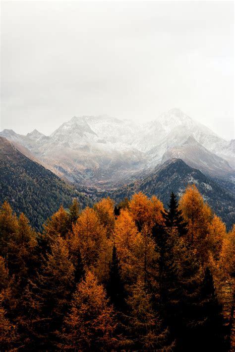 bare tress and mountain photo free autumn image on unsplash