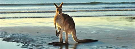 the top 10 things to do in australia viator