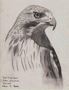Hawk Pencil Drawing, done in H, HB, B3 Pencil | E.T ...