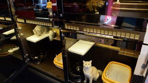 Designer Wallpaper, Swarovski Dining Ware At Singapore Cat