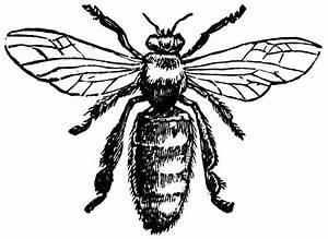 Vintage Bee Design | Printables | Pinterest
