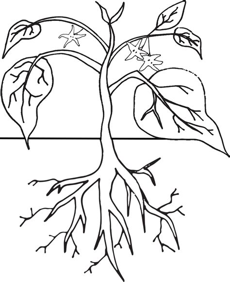 plant coloring pages plant cycle coloring page coloring home