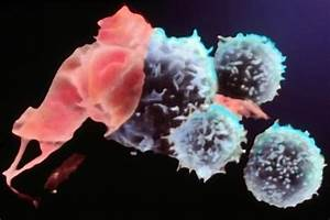 Killer T-Cells, Cancer, and Cell Surface Sugar Structures ...