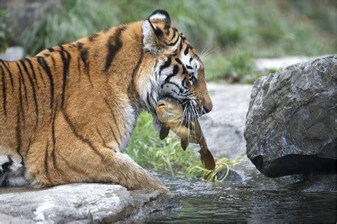 ausflug  den zoo zuerich   care