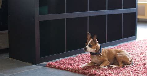 Home Design With Pets In Mind home design with pets in mind