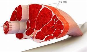 Can The Fasciablaster Help With Fibromyalgia Pain   U2014 Dr