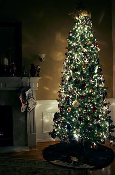 christmas tree alive christmas tree tips