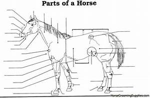 15 Best Images Of Parts Of The Horse Worksheet