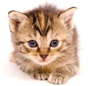pet cat pets creditmunchinfo