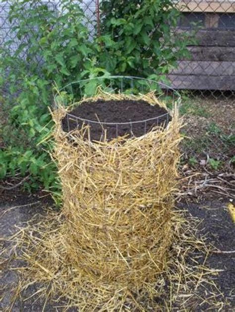 comment cuisiner la pomme de terre comment faire pousser des pommes de terre rapidement et