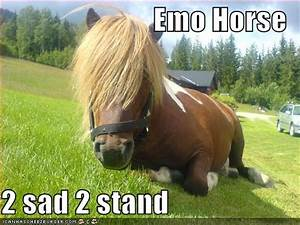 really funny pictures: funny pictures of horses