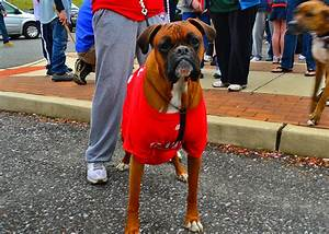 Local Animal Hospital Partners With Jimmy Rollins | Swedesboro