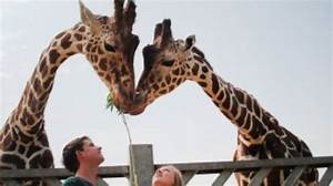 imgur giraffe dating websites
