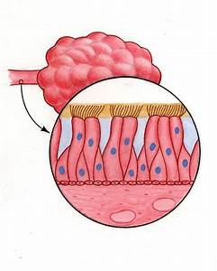 Illustration Diagram Of Cleansing Of Mucous Membrane