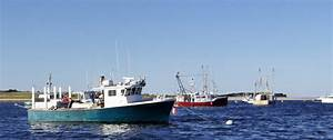 Chatham Harbor & Seal Tours - Cape Cod Boat Tour   Down ...