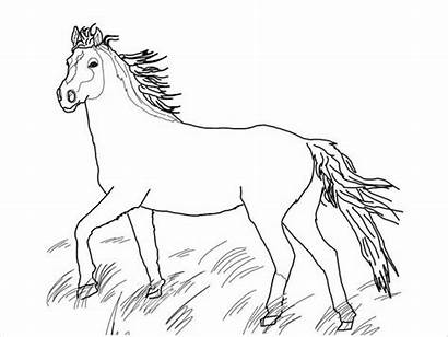 Horse Coloring Pages Wild Colouring Template Templates