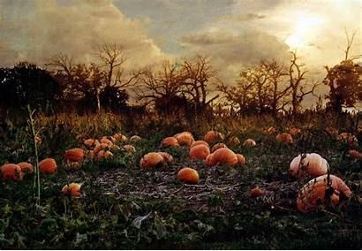 Pumpkin Patch Autumn Halloween Wallpaperup