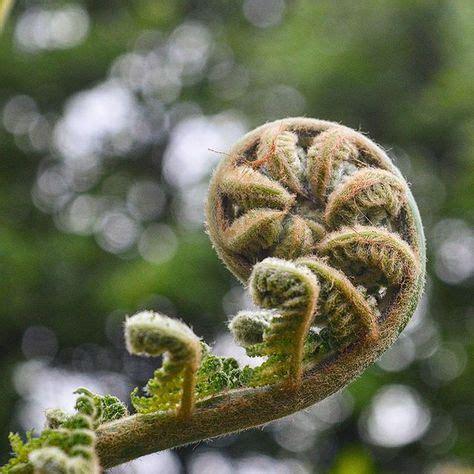 Roll on the weekend! #mondaymorning #weekendblues #fern # ...