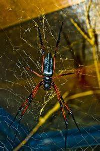 Se Débarrasser Des Araignées : comment se d barrasser des araign es sous les combles de ~ Louise-bijoux.com Idées de Décoration