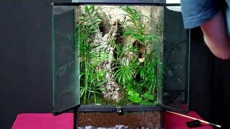 terrarium dla poecilotheria smithi enclosure setup for