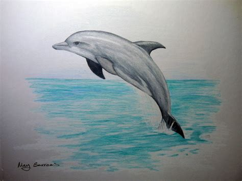 dolphins colors dolphins dolphin swimming pencil and in color
