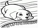 Coloring Dachshund Pages Template sketch template