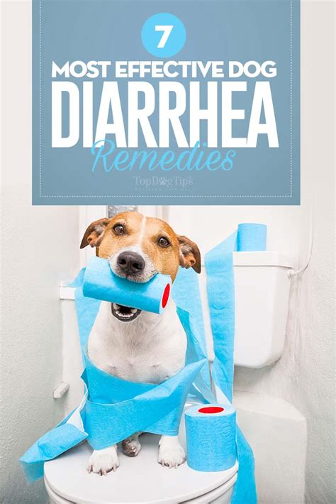 homemade dog food  treat diarrhea homemade ftempo