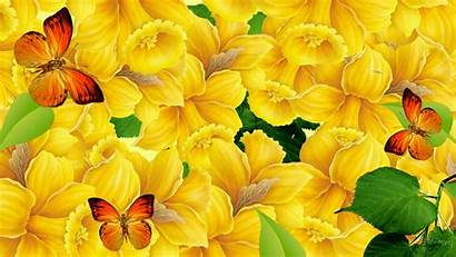 Colorful Unique Wallpapers Awesome Butterflies Butterfly Backgrounds