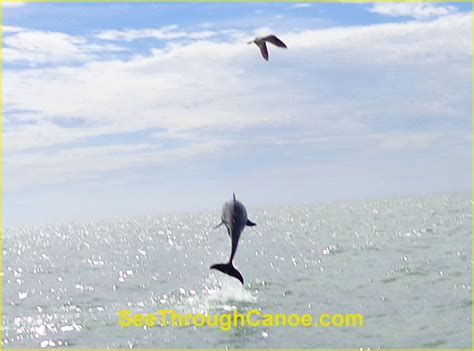 Small Boat Rental Near Me by John S Pass In Madeira Beach Fl