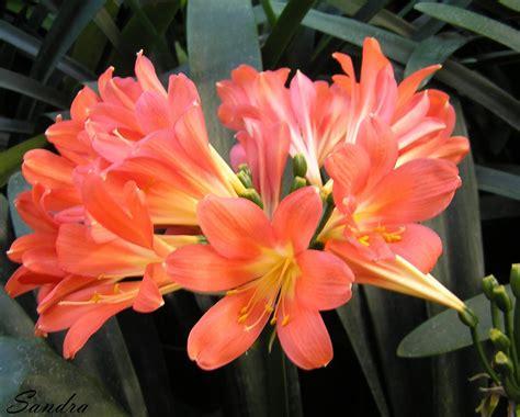Love lives in the garden...: Acālijas un citi augi ...
