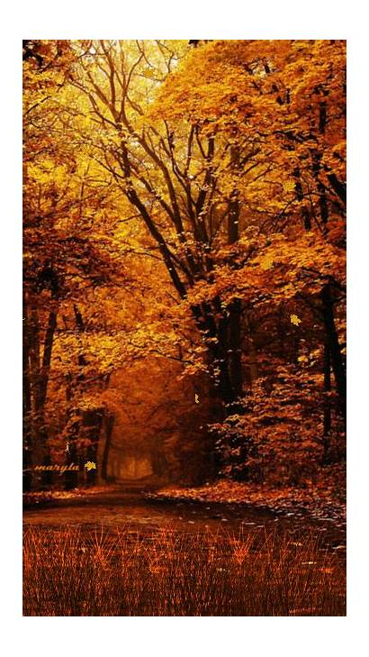 Wordpress Autumn Fall Leaves Nature Falling Another