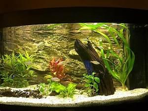 Aquarium Einrichten 60l : aquarium einrichten beispiele die sch nsten ~ Michelbontemps.com Haus und Dekorationen